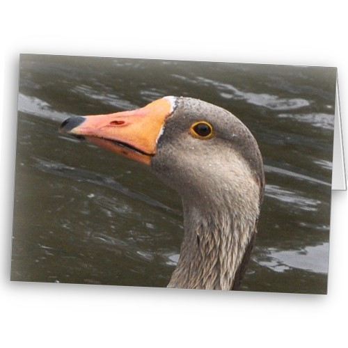 The China Goose and her goslings feature on many cards and gifts on Zazzle