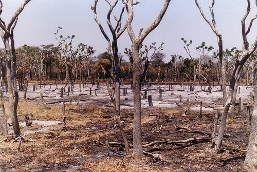 slash-and-burn farming