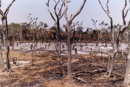 slash-and-burn farming