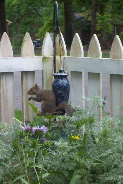 A squirrel makes himself at home in our yard.