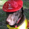 Fireman Halloween Costumes for Dogs