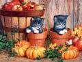HD Wallpapers and High Quality Pictures - Cats and Kittens - Part 1