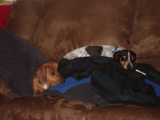 Lou and Copper stay warm and cozy on the couch.
