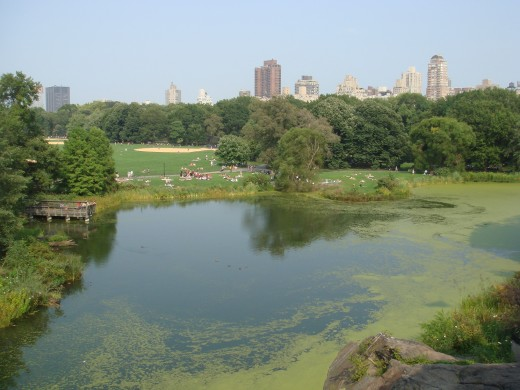 View of Turtle Pond from Belvedere Castle.
