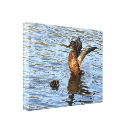 Female mallard and duckling on fine art canvas.