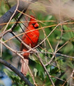 Birdiing in Corpus Christi