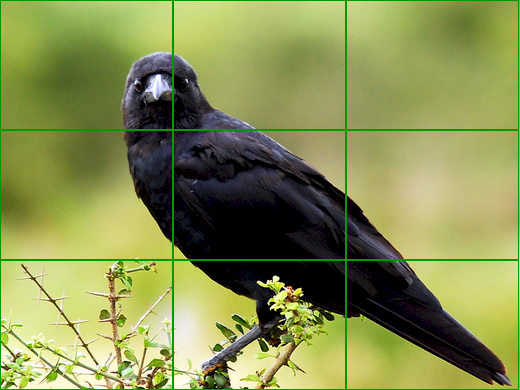 The Rule Of Thirds - Composition