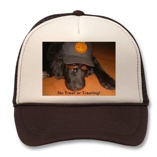 "Susan's Newfoundland dog is either sad or sleeping. In any case he is so cute with his sunglasses and hat. Caption: ""No Trick or Treating!"" You can find Susan here on HubPages as Just Ask Susan."