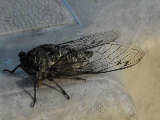 Macro shot of a bug 2011