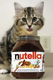 A very cute nutella kitten.