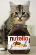 A very cute nutella kitten.