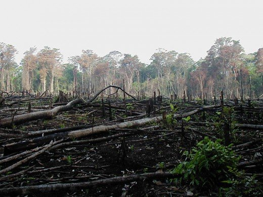 A forest burnt for agricultural use in Mexico. A change of forest cover in Amazon rainforest may as well affect weather and climate in faraway places like India. Image Credit: Jami Dwyer, Wikimedia Commons