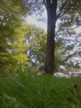 Prince Fredward can hide even beside trees!