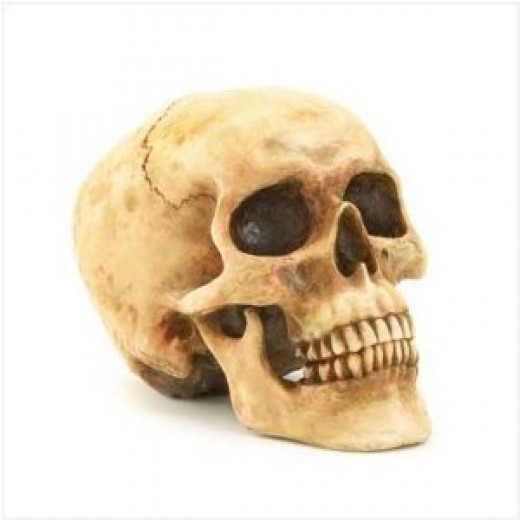 This is a great looking grinning skull available from Amazon!