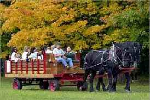 A horse drawn wagon is the ideal hayride!