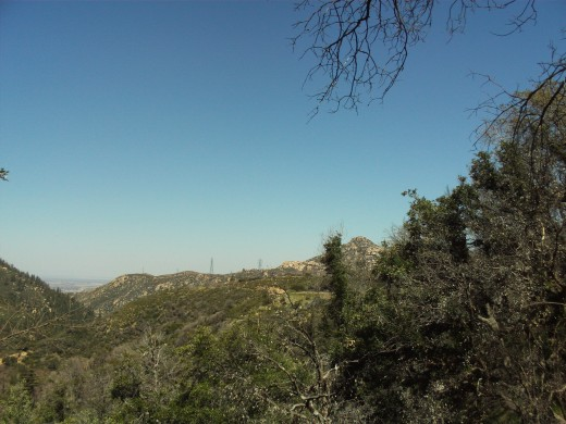 Looking out towards The Pinnacles, with the trees obscuring part of the view.