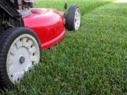 You will enjoy full lush grass when you do not mow your lawn too closely!