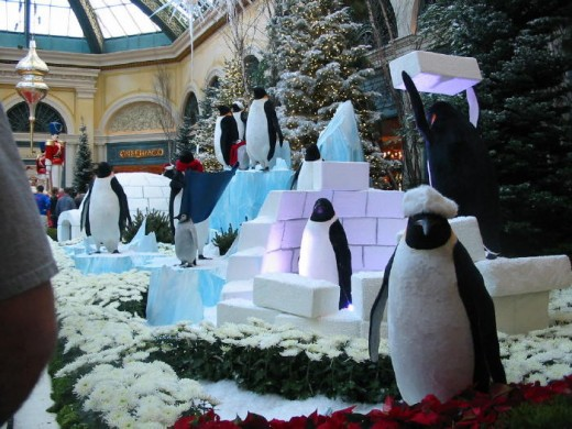 A truly beautiful part of the Christmas display! Penguins!!