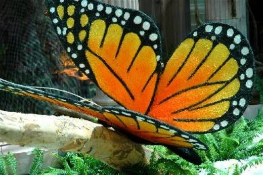 A gorgeous butterfly.
