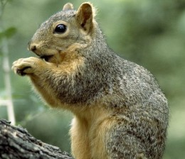 Nutsy the Squirrel