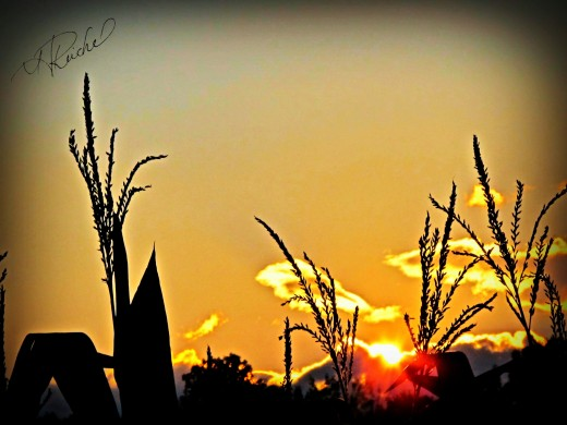 Day 8 extra- the original subject I was going to shoot- the sunset over the corn fields