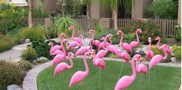 """Flamingo yard decorations, usually accompanied by a sign that says """"you've been flocked!"""""""