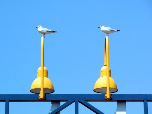Seagulls enjoying a beautiful blue sky