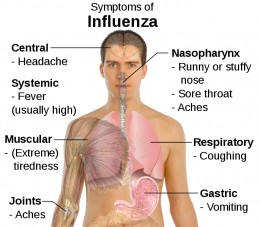 The Flu Is Much More Dangerous Than The Common Cold.