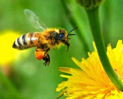 How Bees Make Honey And Propolis With Great Health Benefits