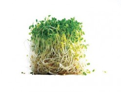 Broccoli Sprouts have scientifically proven anti-cancer properties (Nutritional Healing)
