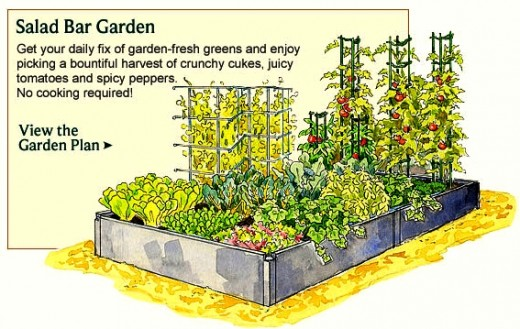 Vegetable Garden Layout Diagram Vegetable Free Engine