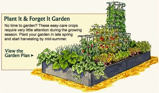 Gallery For > Raised Vegetable Garden Layout 4x8
