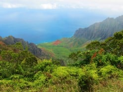 Hike the Alakai Swamp Trail on Kauai