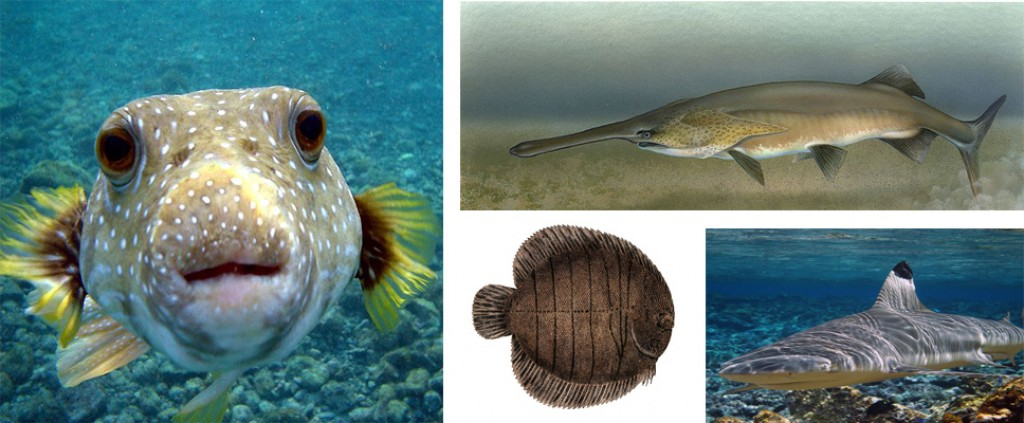The main types of fish in salt and freshwater hubpages for Fish on main