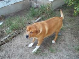 Dog, my dog.