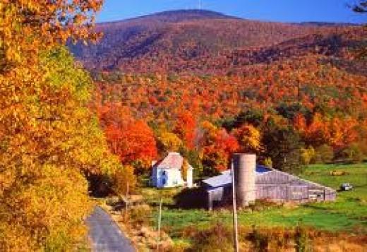 Some BEAUTIFUL Fall Foliage!