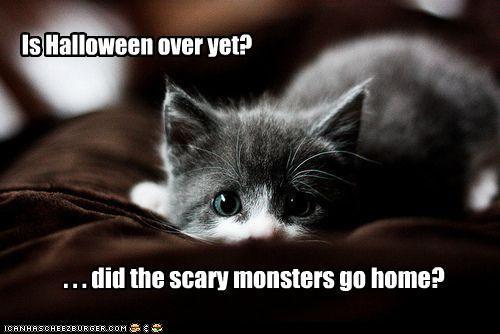 Aww, poor kittah!