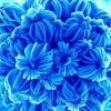 sriharsha11 profile image