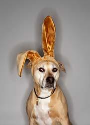Look at 'dem ears!