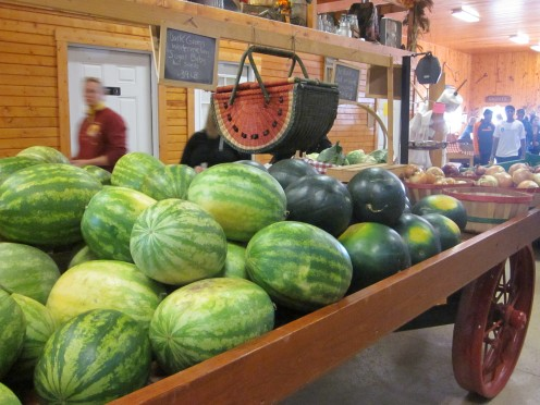 Watermelons fresh from the garden