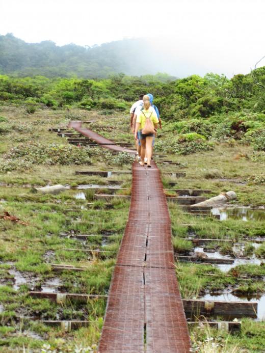 walking through the bogs
