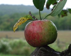 Historic Apple Orchard near Birdsboro, PA Open to Public (13 Photos)