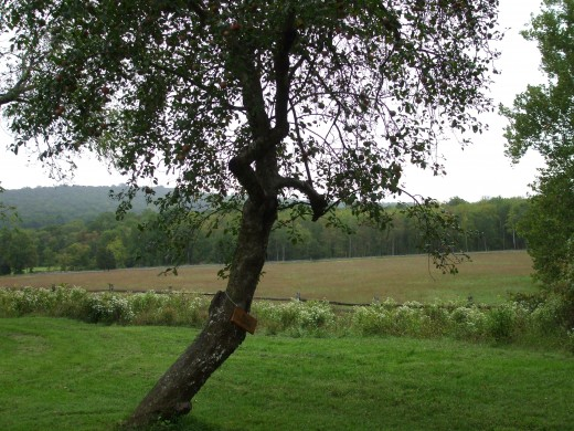 Orchards and pastures at Hopewell Furnace Plantation.
