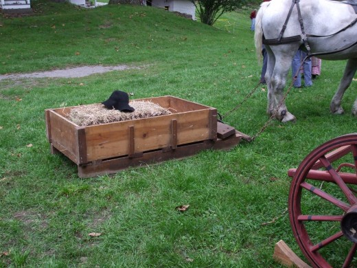 Horse pulling a sled of cargo.