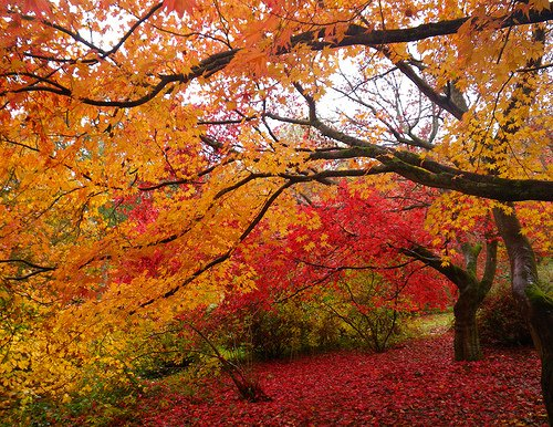 The Season Of Fall: Reasons Why Autumn Is The Best Season