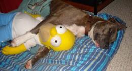 Sleepover with Homer