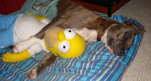 Sleepover with Homer