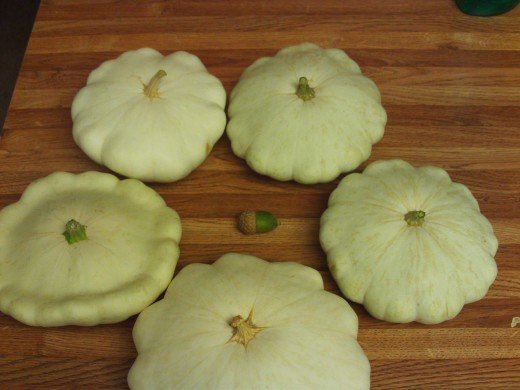 Patty pan squash forming a circle around an acorn.