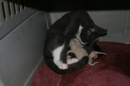Mama and kittens