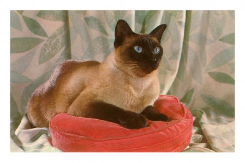"""""""MAX,"""" WAS MY BEST FRIEND IN 1973. HE WAS A BEAUTIFUL-BUT-MISCHEVIOUS SIAMESE CAT. SOMEONE, WHO HAD NO HEART, STOLE HIM ONE DAY."""
